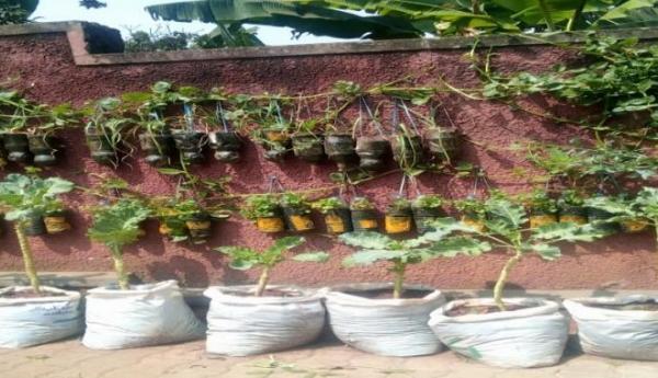 Photos: In Kamwanyi, Kampala