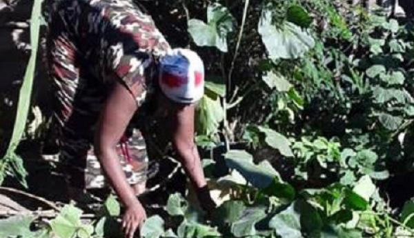 Urban farming: Katwe residents leave no space to waste By Nakandi Mastula